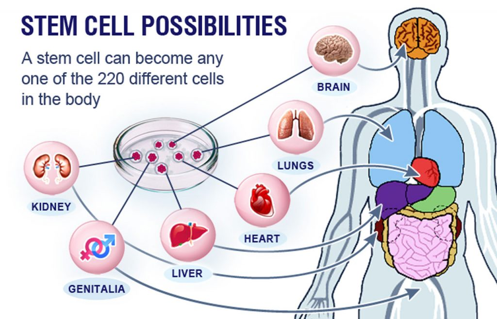 Stem cells research image